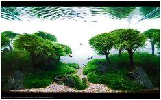 Aquarium master piece by Takashi Amano