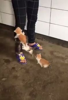 So many cute kittens videos compilation 2018 · Funny Videos So Cute Baby, Cute Baby Cats, Cute Little Animals, Cute Funny Animals, Funny Cats, Cute Babies, Funny Humor, Baby Kitty, Kitty Kitty
