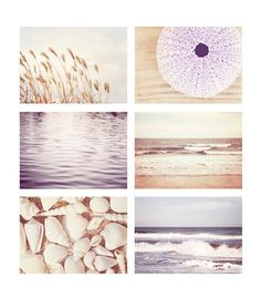 Beach Photo Set - Six Photographs 11x14, 8x10, 5x7 - ocean seashell cream pale purple lavender sea shells photography nautical wall print on Etsy, $72.00