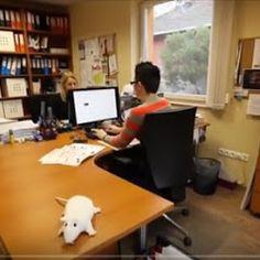 Irtó Trió Kft - Kártevőirtás, Rovarirtás, Egérirtás, Csótányirtás, Ágyi poloska irtás, Miskolc – Fotók Business Help, Office Desk, Desk Office, Desk