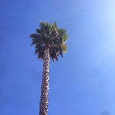 Palm love. | One Turn Kill
