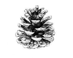 Pine cone tattoos are absolutley beautiful, wolud like to do this on my inner bicep