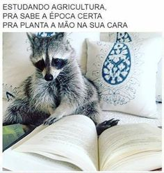 Raccoons are smart little critters! Cute Raccoon, Racoon, Animals And Pets, Baby Animals, Cute Animals, Animal Pictures, Cute Pictures, Cute Rats, Paws And Claws