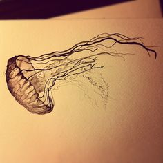 Jellyfish in ink and water colour