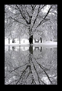 Ice Storm  Photo and Photo Manipulation by Nan Martin Barnum