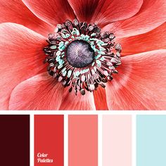 A soft coral color that creates a balance between bright red, deep burgundy and soft shades of pink and blue is in the centre of the palette. This combinat Red Colour Palette, Colour Schemes, Color Patterns, Color Combinations, Color Concept, Color Balance, Design Seeds, Coral Color, Red Color