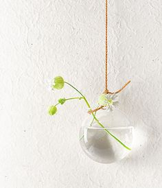 Hanging Vase or in my insane imagination they might be a fish instead Glass Photography, Hanging Vases, Pottery Vase, Home Decor Furniture, Ikebana, Diy Flowers, Home And Garden, Garden Fun, Design Elements