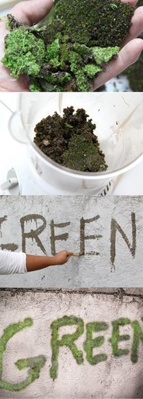 Moss Graffiti - maybe I won't write anything but this is a great idea for a mossy filler!