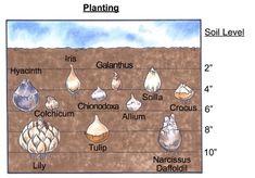 FALL is the time to plant Spring bulbs.  Iris, Crocus, Tulips, Hyacinths  ECT