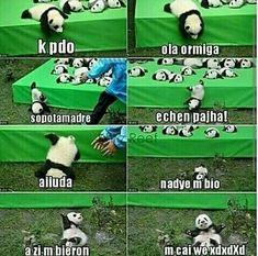 ni pedo la vida sigue xDxdxdD#humor#panda#qxoshetamalendhazecaio7u7