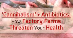 """Factory Farm """"Cannibalism"""" and Rising Antibiotic Use Pose Serious Threats to Human Health"""