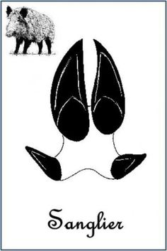 Sanglier (Sus scrofa) Plus Camping Activities, Activities For Kids, Bear Footprint, Mushroom Crafts, Animal Tracks, Preschool Education, Nature Study, Wilderness Survival, Land Art