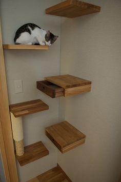 12 Gatos no blog Detalhes Magicos