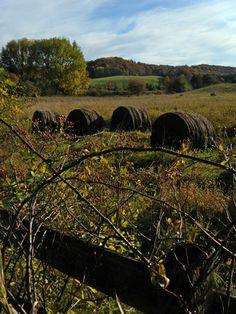 Buttercup Farm Sanctuary Audubon