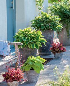 Pflanzgefäße zu beiden Seiten der Haustür sind ein gelungener Blickfang – zum Beispiel besetzt mit Blattschmuckstauden wie Goldrand-Funkie, Funkie 'Francee' mit weißem Rand, gelblaubiger Funkie 'Sun Power', Goldschuppen-Farn und Purpurglöckchen 'Red Fury'