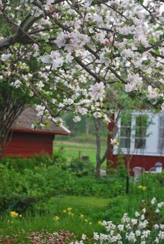 Springtime in Sweden - Julias Vita Drömmar Swedish Cottage, Red Cottage, Swedish House, Red Houses, House In Nature, Country Lifestyle, Scandinavian Living, Anne Of Green Gables, Country Farm