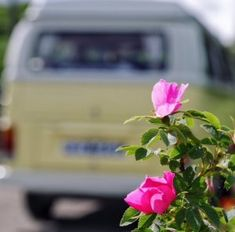 VW Campervan vouchers from Kippford Classic Car Hire, in SW Scotland. The perfect for gift for your VW camper loving friends Vw Camper, Travel Light, Campervan, Driving Test, Classic Cars, Camping, Road Trip, Campsite