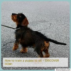 Best Dog Training Books, Dog Training Classes, Dog Training Tips, Potty Training, Training Online, Origin Of Dogs, Funny Looking Dogs, Dog Minding, Easiest Dogs To Train