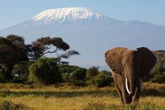 キリマンジャロ(Kilimanjaro)