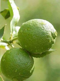 Limoes (limes)