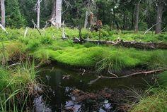 Dvorský les ve Východních Krkonoších