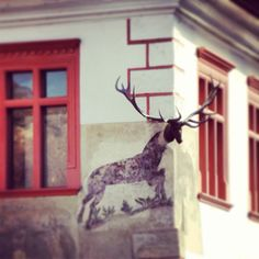 A deer gettin' out of the wall, Sighișoara Romania, Giraffe, Deer, Moose Art, Wall, Animals, Felt Giraffe, Animales, Animaux