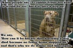 BDAR is actively recruiting foster homes in Cheyenne, Casper, and Laramie, WY.  Help save the lives of kill-shelter dogs by fostering.  Visit www.bdar.org to learn more.
