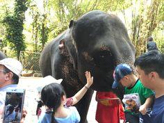マリンパークはキリンやゾウを間近で観て触れる動物園 バンコク日帰り旅行