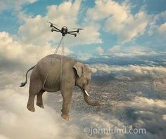 Drone Carrying Elephant!!!! Is it possible???  www.Dronemylove.com
