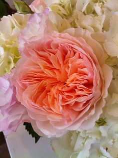 Juliet Rose - such a dramatic and romantic bloom