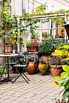 Pin by ann guerin on patio garden landscaping backyard in 20 Small Courtyard Gardens, Small Gardens, Outdoor Gardens, Townhouse Garden, Garden Spaces, Outdoor Rooms, Indoor Plants, Balcony Plants, Balcony Garden
