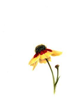 Original Flower - Colored Pencil Drawing - Sam Luotonen