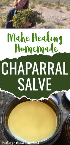 Find out the benefits and uses of chaparral, a plant to forage (or purchase from sustainable bulk herb shops), along with my favorite recipe for chaparral salve. This homemade healing salve is better than neosporin! Great for your natural home apothecary. #salve #recipes #herbal #healing #antibacterial #diy #diyhealing #healingharvesthomestead Natural Cures, Natural Healing, Healing Herbs, Herb Shop, Salve Recipes, Healthy Beauty, Medicinal Herbs, Herbal Medicine, Herbal Remedies