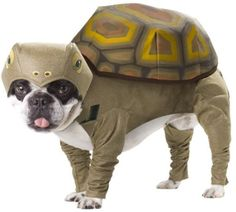 dog couture costumes | Dog Halloween Costumes: Dinosaurs, Superheros, Sharks, Yoda and More!
