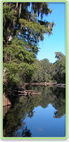 For camping and cabin rentals at any of the Florida state parks along the Suwannee River, call Reserve America at (800) 326-3521, (866) I CAMP FL, TDD (888) 433-0287 or visit www.ReserveAmerica.com. Fees vary.