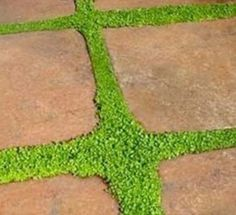 Spaced-Out Stones    Leaving space between stones will allow greenery to grow and contribute to the natural beauty of a garden walkway. Arrange the stones accordingly, leaving a few inches of room for grass or moss. Or consider interspersing drought-tolerant plants like thyme—as landscape designer and author Susan Schlenger suggests—to create softness, interest, and charm.