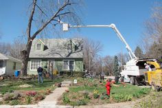 Bad Trees | Tree Choices for the Yard | Planting Trees Tips