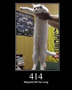 Cat memes See I'm taller than you I Love Cats, Cute Cats, Funny Cats, Funny Animals, Cute Animals, Animal Fun, Animal Memes, Baby Animals, Long Cat