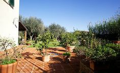 The lemon trees are resting in the sun terrace away from the cold winter