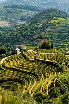 Travel Inspiration for Portugal - Douro Valley, Portugal