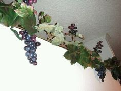 Grapes for wine theme