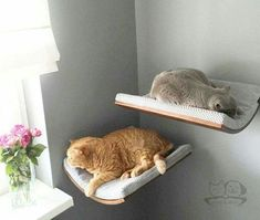 These look cool and comfortable for kitty!