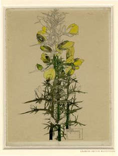 Drawing by Charles Rennie Mackintosh and Margaret Mackintosh. Gorse Walberswick. Watercolour, over graphite, 1915