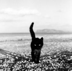 encore un chat noir