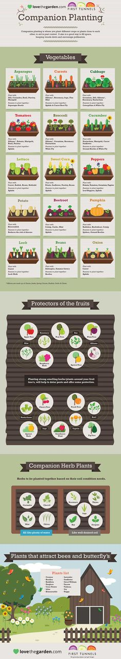 Secrets to Growing Tomatoes in Containers Companion planting infographic. - - Secrets to Growing Tomatoes in Containers Companion planting infographic… Gardening Secrets to Growing Tomatoes in Containers Companion planting infographic… Planting Vegetables, Growing Vegetables, Veggies, Growing Tomatoes In Containers, Vegetable Garden Design, Vegetable Gardening, Backyard Vegetable Gardens, Garden Types, Garden Care