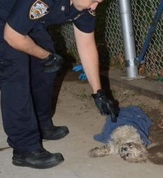 Dog dies after being thrown down garbage chute into trash compactor