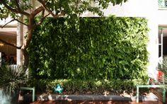 Emanuelle Felippe Interiores: Jardim Vertical