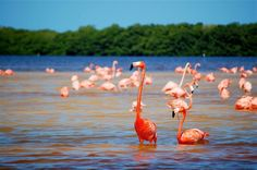 Colorful flamingos are a spectacular feature of the Biosfera Ría Celestún at certain times of the year © Yucatán Tourism Board