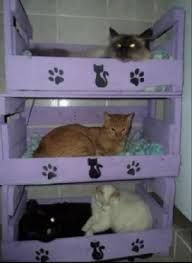 Anyone can turn old crates into a sweet little bed for your kitty. Plastic Milk Crates, Cat Habitat, Cat Playhouse, Animal Gato, Old Crates, Animal Room, Lots Of Cats, Cat Garden, Cat Room