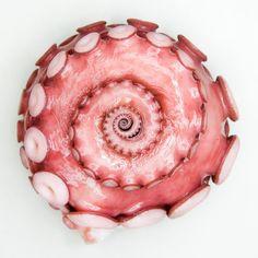 octopus // pink